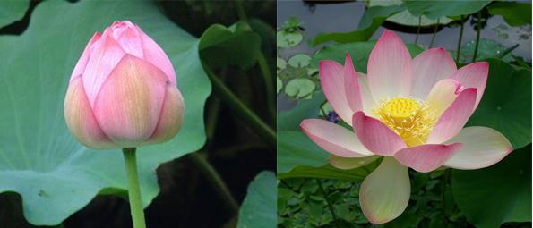 Les 5 Astuces Pour Un Accouchement Zen Maman Zen