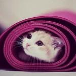 Contruire-sa-séance-de-yoga